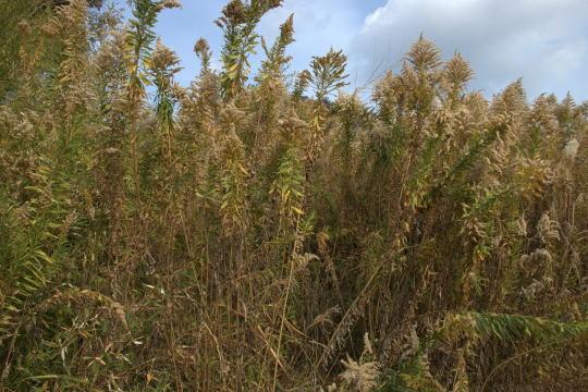 丸子山城 曲輪の草
